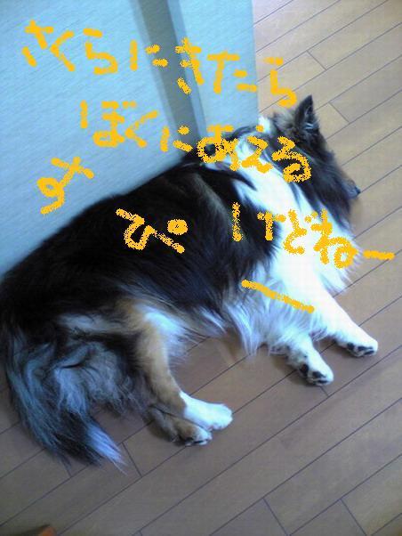 Image7688.jpg