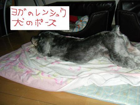 012_convert_20091025170636.jpg