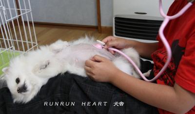 瑠妃(ルビー)聴診器