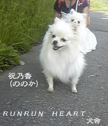 祝乃香(ののか)の散歩
