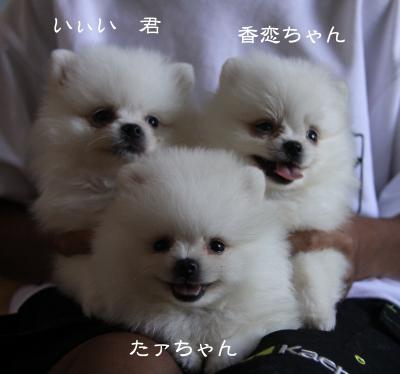 香恋3兄妹