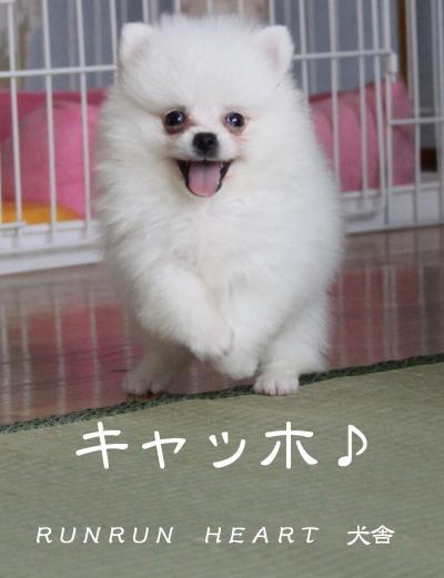 いぃい 君 キャッホ