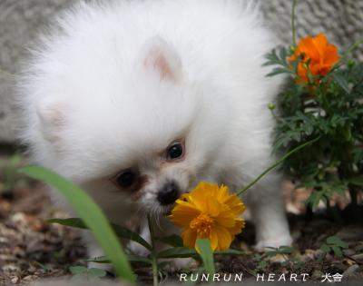 いぃい 君 お花