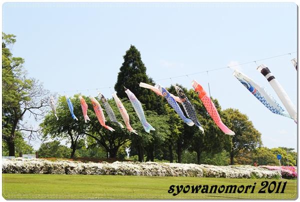 昭和の森20115月8日
