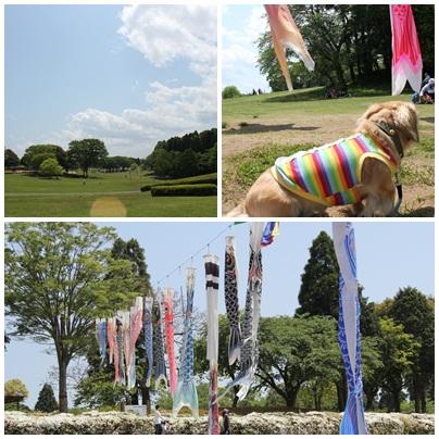 2昭和の森 2011 ポン太