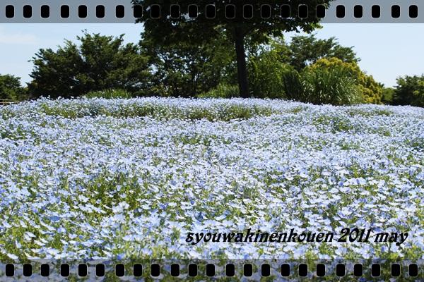 昭和記念公園 2011
