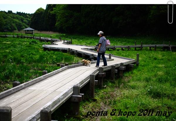 A昭和の森