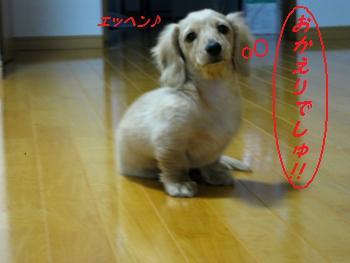 buddy80_20100131121006.jpg
