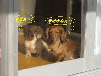 oyako23.jpg