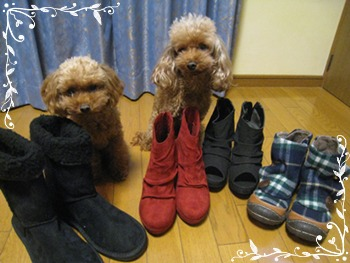 靴屋さん?