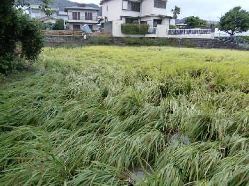10月8日台風1