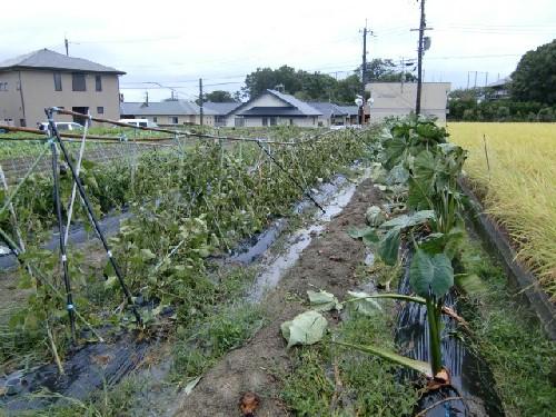 10月8日台風2