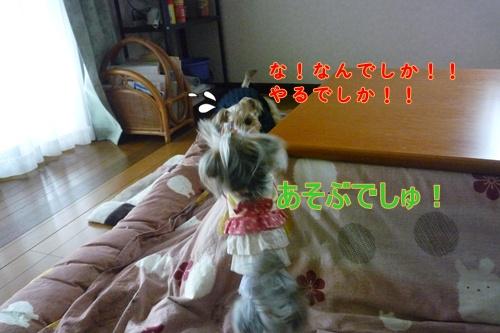 モコちゃん&ナナ