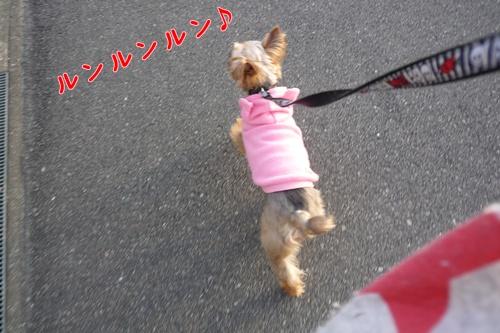 ナナお散歩