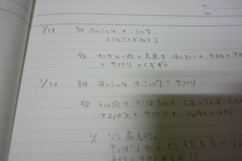 ナナ日記3