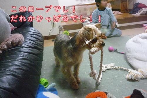 薄汚れたロープ