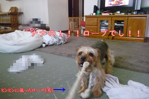 でも小型犬です(笑)
