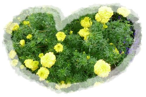 花はキレイ