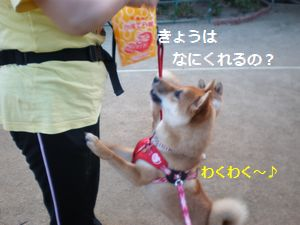 001_20100614020118.jpg