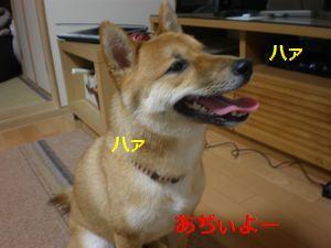 001_20100618104456.jpg