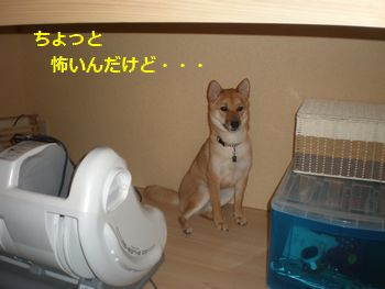 001_20100803222110.jpg