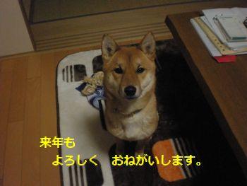 001_20101231200630.jpg