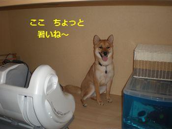 002_20100803222109.jpg
