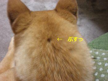 002_20110404161137.jpg