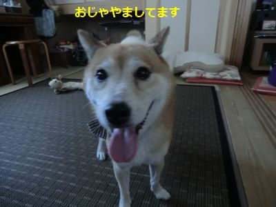 002_20110817124411.jpg