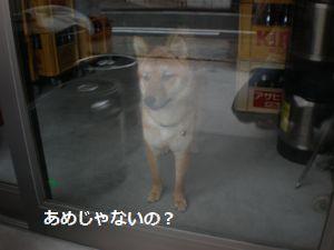 003_20100613104424.jpg