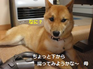 005_20100520114213.jpg
