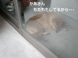 005_20100613104423.jpg