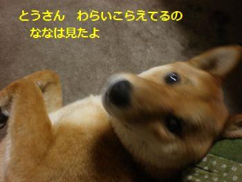 006_20110404161137.jpg