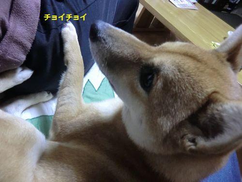 006_20111020205316.jpg