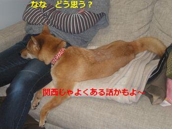 007_20110214154825.jpg