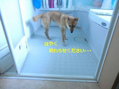 007_20110908103841.jpg