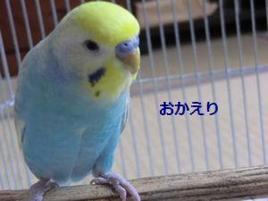 008_20110616122959.jpg