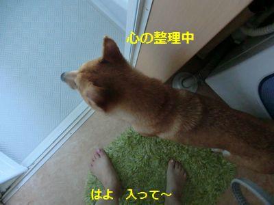 008_20110908103840.jpg