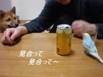 009_20100227165518.jpg