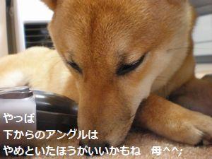 009_20100520114212.jpg