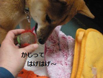 010_20100324091911.jpg