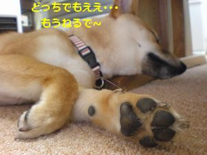 010_20100520114212.jpg