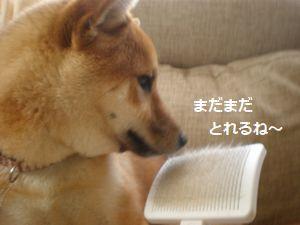 011_20100612145638.jpg