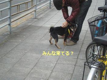 011_20110119072024.jpg