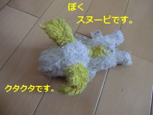 012_20110514152350.jpg