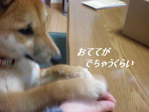013_20100304154311.jpg