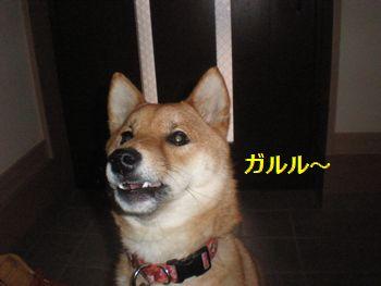 013_20110321130946.jpg