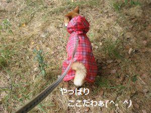 022_20100613104432.jpg