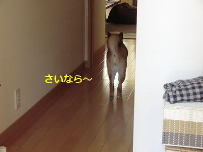 022_20110428165502.jpg