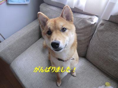 024_20110519080620.jpg